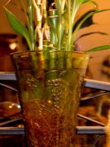 glass bamboo